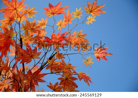 Red leaves, Autumn background - stock photo