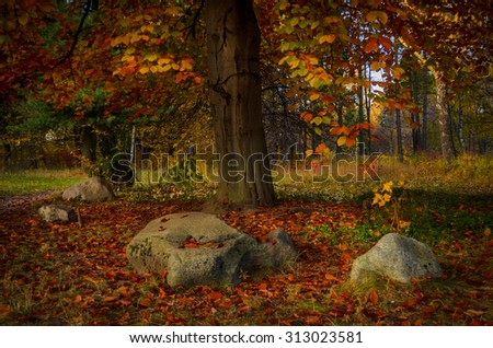 red leaves under the autumn tree in the park - stock photo