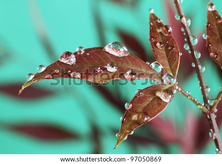 Red Leaves with Dew Drops - stock photo