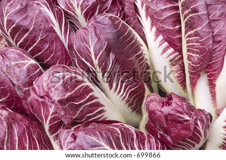 red lettuce background - stock photo