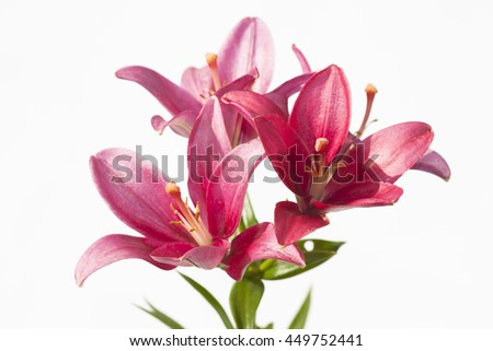 red lilies on a white background