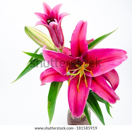 Red lily - stock photo
