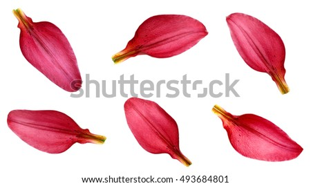 red lily petals stock photo edit now 493684801 shutterstock