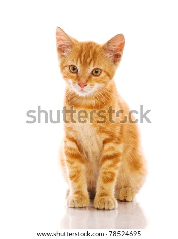 Red little cat - stock photo
