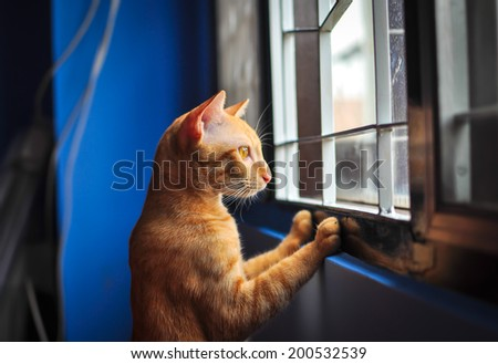 Red little cat looking out the window - stock photo