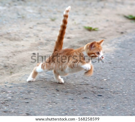 Red little kitten hunt by the mosquito on road on sunny day on summer - stock photo