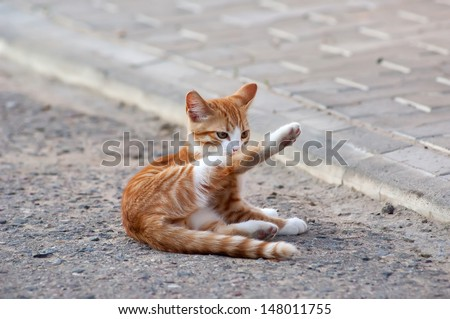 Red little kitten play on sunny day on summer - stock photo