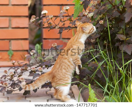 Red little kitten sniff a flower on sunny day on summer - stock photo