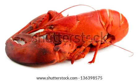 Red lobster isolated on white - stock photo