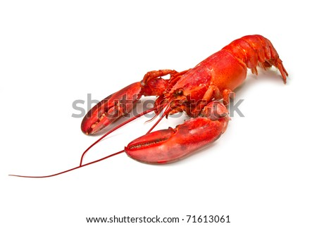 red lobster pasta - stock photo