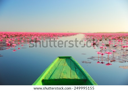 Red lotus in the pond at Kumpawapee, Udon Thani,Thailand - stock photo