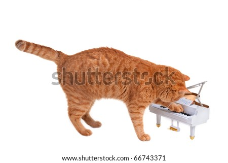 Red Lovely Kitten Is Playing On a Toy Piano Isolated On White Background - stock photo