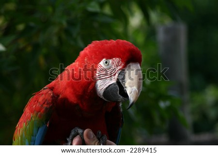 red maca parrot sitting on the hand of his trainer