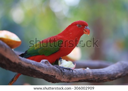 Red macaw parrot on a colorful background. - stock photo