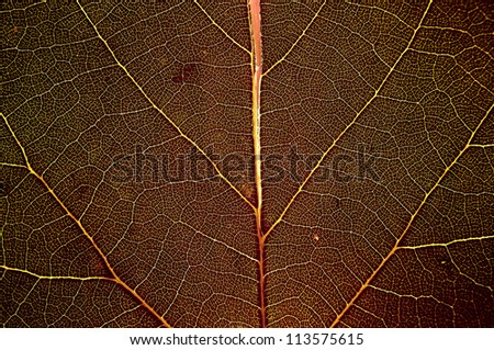 Red macro leaf - background texture - stock photo