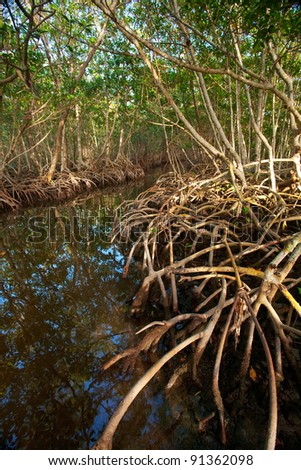 Red Mangrove Roots in Caribbean - stock photo
