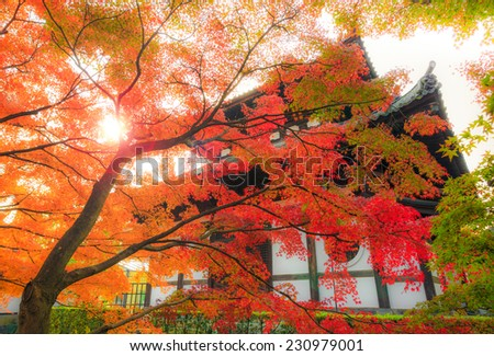 Red Maple and Sunrise at Tofukuji Temple, Kyoto, Japan in Autumn - stock photo