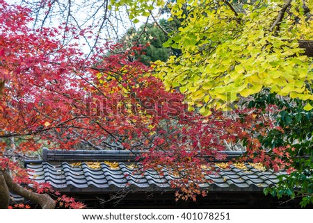 Red maple and yellow ginkgo biloba leaves on trees over roof. Colorful leaves in late autumn foliage in Japan, Asia. - stock photo
