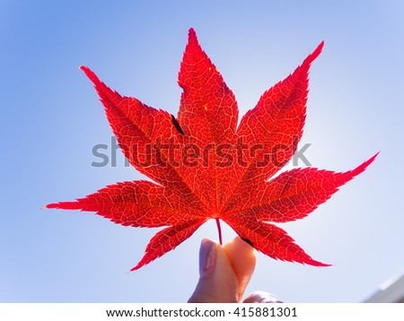 Red maple leaf - stock photo