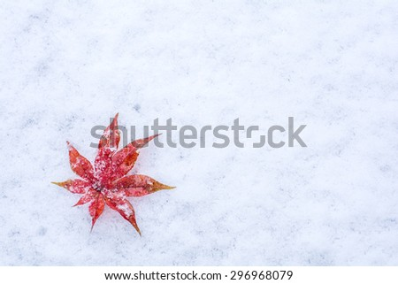 Red maple leaf (acer palmatum) on a snow in early winter - stock photo