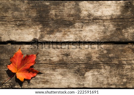 Red maple leaf background with copy space - stock photo