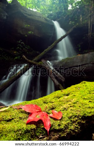 Red maple leaf  fall down into the green moss with waterfall background, Man-Daeng Waterfall Pitsanulok North of Thailand - stock photo