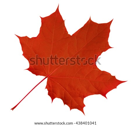 Red Maple Leaf isolated on white background. Clipping path included. - stock photo