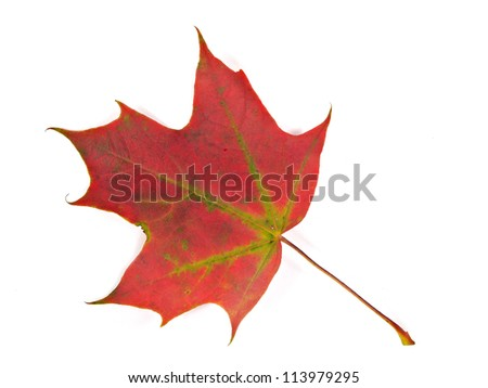 Red maple leaf on a white background.