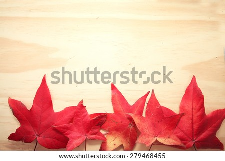 Red Maple leaf on the wooden table background with copy space