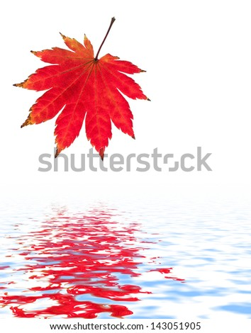 Red maple leaf reflected in water. - stock photo