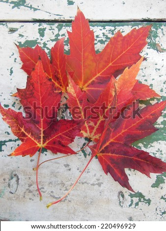Red maple leaves in autumn on grunge picnic table - stock photo