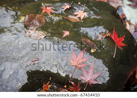 Red maple leaves on stone after rain in Kyoto, Japan - stock photo