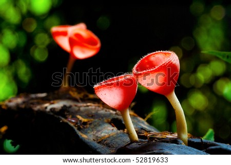 Red mushroom in the tropical rain forest. - stock photo