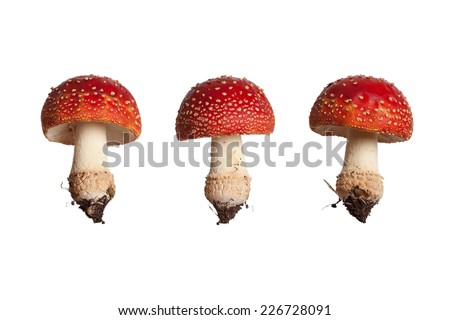 Red Mushroom Isolated