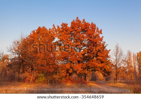 Red oak tree against the blue sky - stock photo