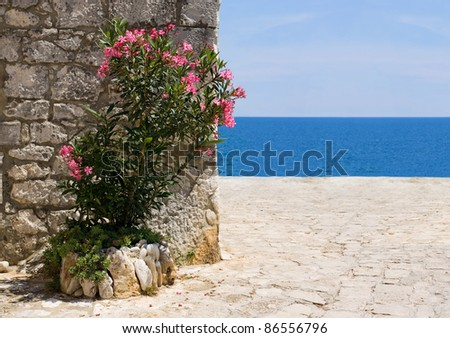 Red oleander flowers with blue sea background and stone apron in Rovinj, Croatia. - stock photo
