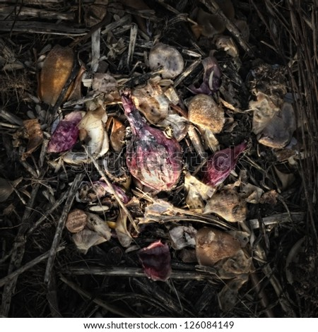 Red onion on a Compost Heap/Artistically alienated to create a grungy somber atmosphere. - stock photo