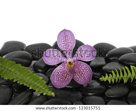 Red orchid and green fern on pebbles - stock photo