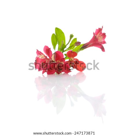 Red orchid with leaf on white - stock photo