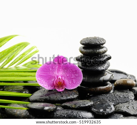 red orchid with palm on stacked wet black pebbles