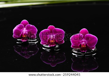Red orchid with therapy stones  - stock photo
