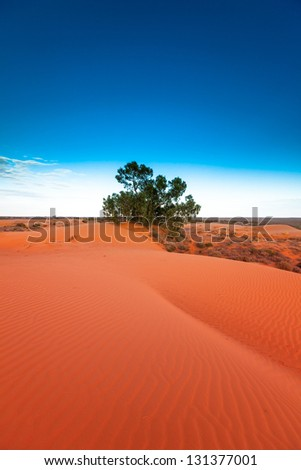 Red outback ripple sand dune desert with blue sky. - stock photo