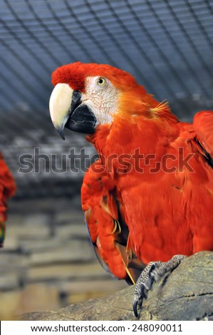 red parrot - stock photo