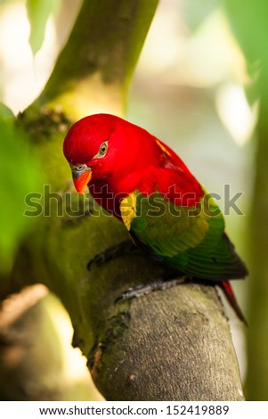 Red parrot holding on the branch of tree - stock photo