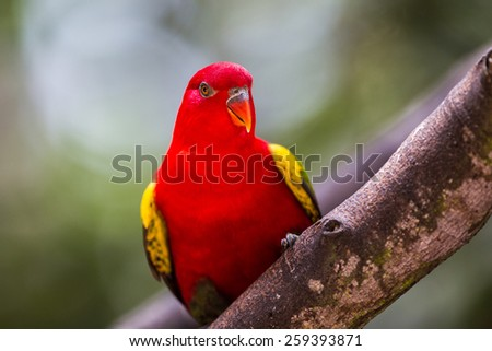 red parrot on the nature. - stock photo