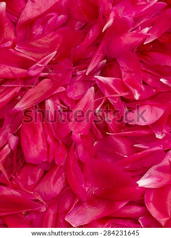 red peony - petals on the table - stock photo