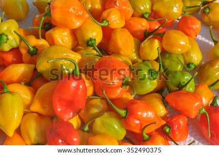 Red peppers (Capsicum) aka bell peppers vegetables vegetarian food