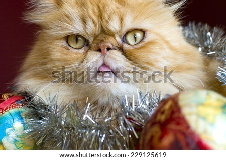 Red Persian cat with christmas balls - stock photo