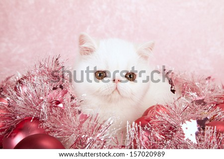 Red Persian cat with pink festive Christmas decorations on pink background