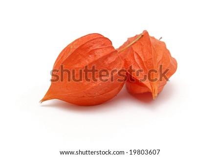 Red Physalis alkekengi - Cape gooseberry - stock photo